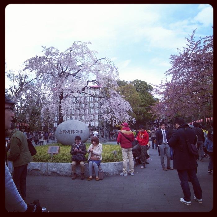 2012.4.7 TOKYO桜Ride ~桜セブンサミッツ縦走~_b0219778_1213316.jpg