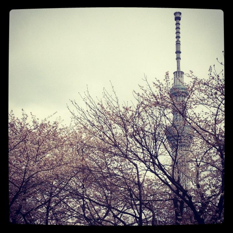 2012.4.7 TOKYO桜Ride ~桜セブンサミッツ縦走~_b0219778_948469.jpg