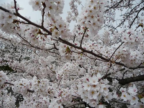 久々の香川うどんツーリング_e0173183_963044.jpg