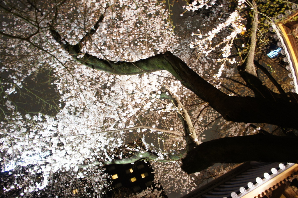 東京2日目、桜満喫+秀吉さんで満喫晩餐。_c0180686_040553.jpg