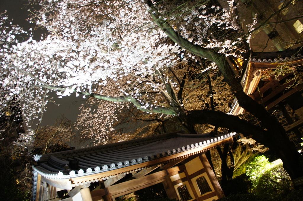 東京2日目、桜満喫+秀吉さんで満喫晩餐。_c0180686_0421379.jpg