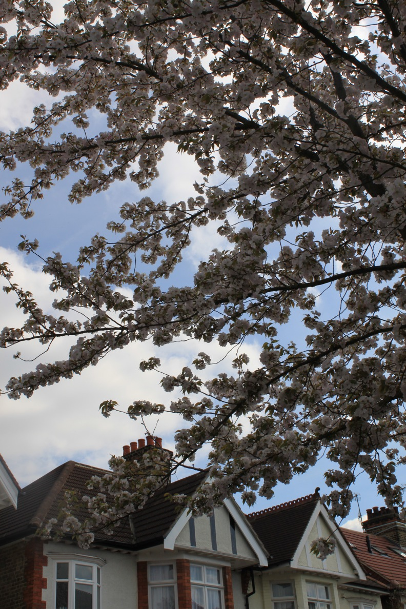 春のガーデニング_a0137487_4273728.jpg