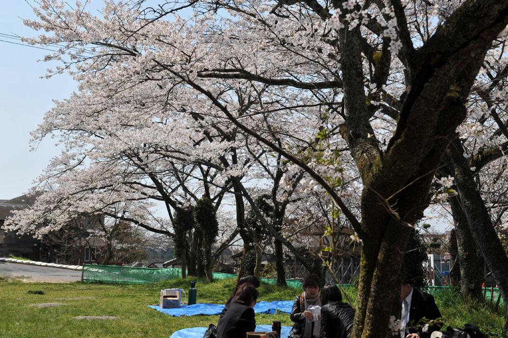 宝満宮 竃門神社 桜の季節_a0042310_1002275.jpg