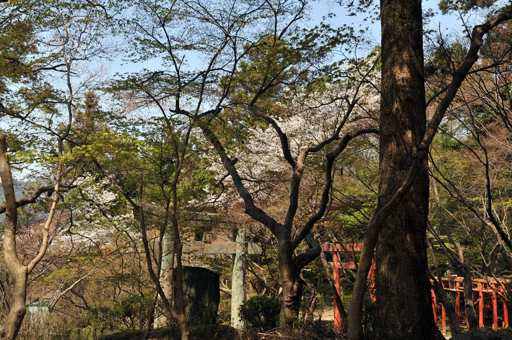 宝満宮 竃門神社 桜の季節_a0042310_10112581.jpg