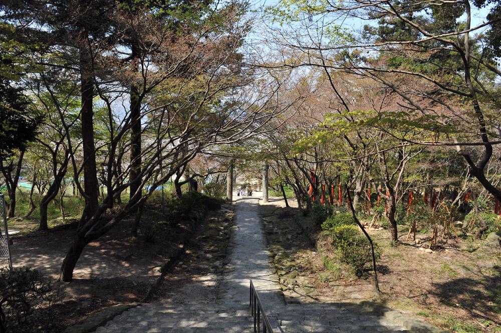 宝満宮 竃門神社 桜の季節_a0042310_1011799.jpg