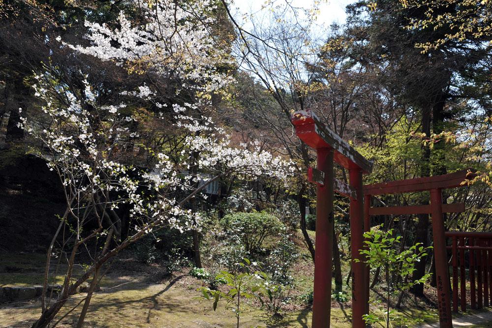宝満宮 竃門神社 桜の季節_a0042310_1013199.jpg