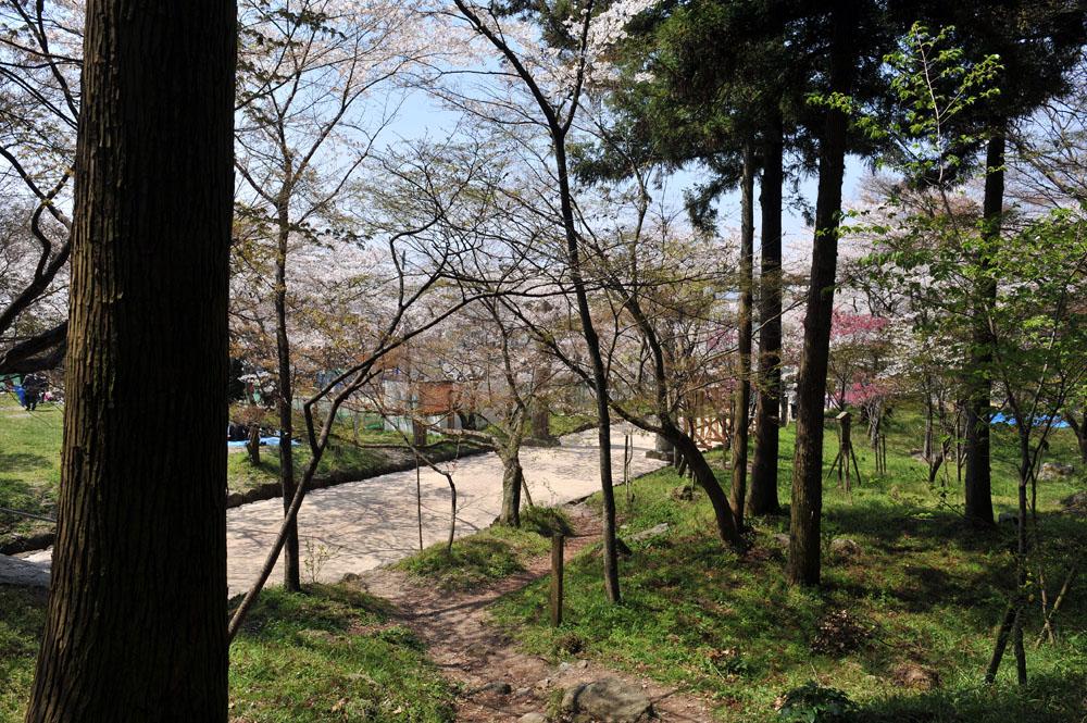 宝満宮 竃門神社 桜の季節_a0042310_10154063.jpg