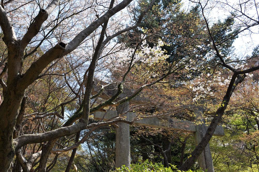 宝満宮 竃門神社 桜の季節_a0042310_10155366.jpg