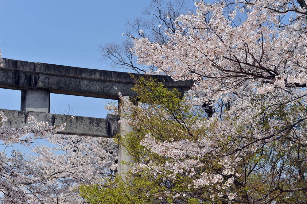 宝満宮 竃門神社 桜の季節_a0042310_10161377.jpg