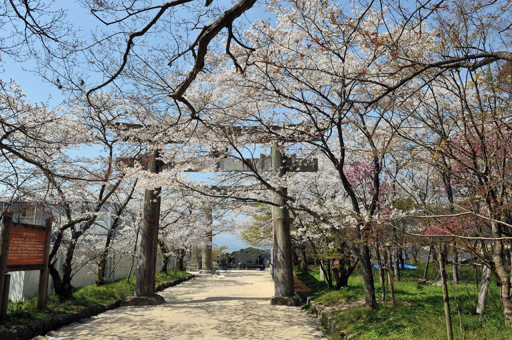 宝満宮 竃門神社 桜の季節_a0042310_1016340.jpg
