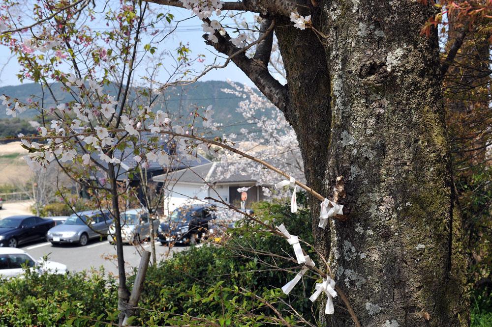 宝満宮 竃門神社 桜の季節_a0042310_10173270.jpg