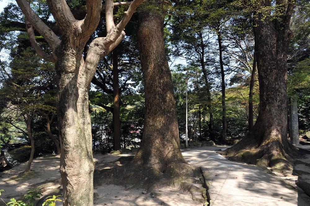 宝満宮 竃門神社 桜の季節_a0042310_10327100.jpg