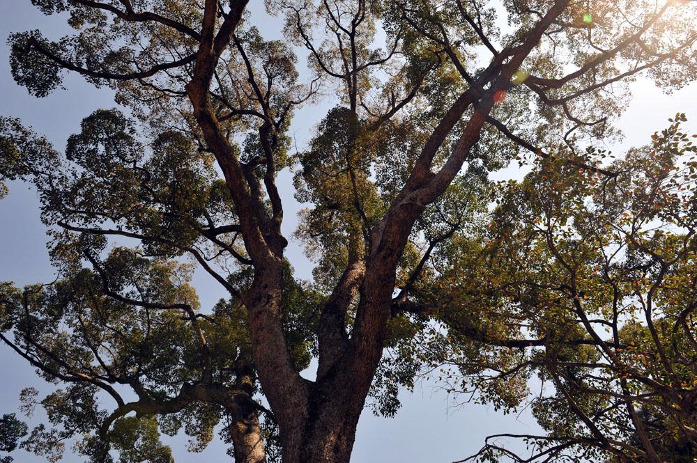 宝満宮 竃門神社 桜の季節_a0042310_106049.jpg