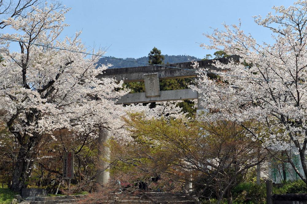 宝満宮 竃門神社 桜の季節_a0042310_9544092.jpg