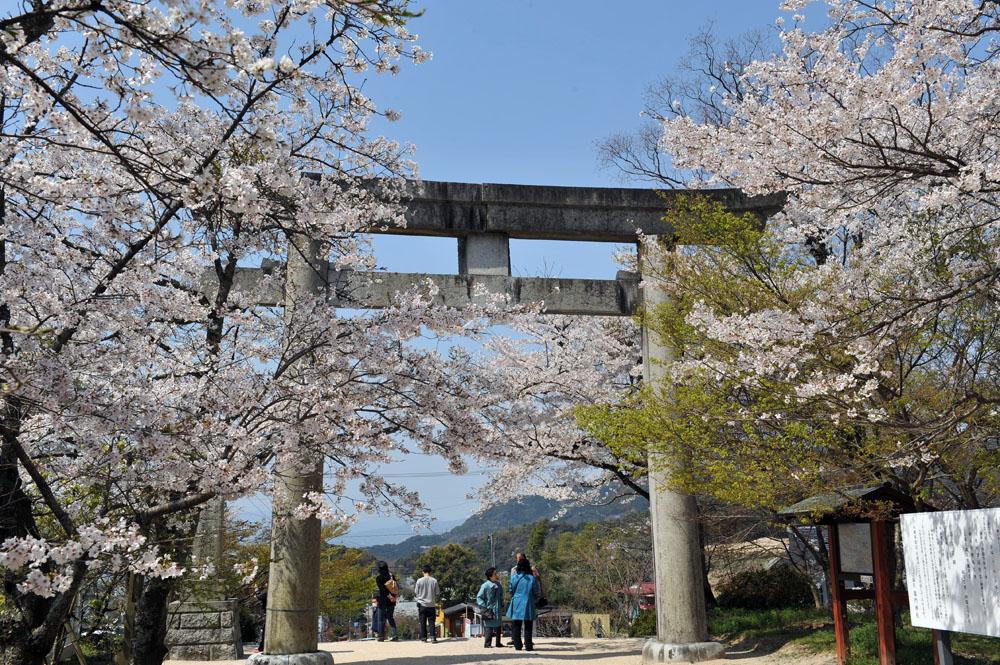 宝満宮 竃門神社 桜の季節_a0042310_9563422.jpg