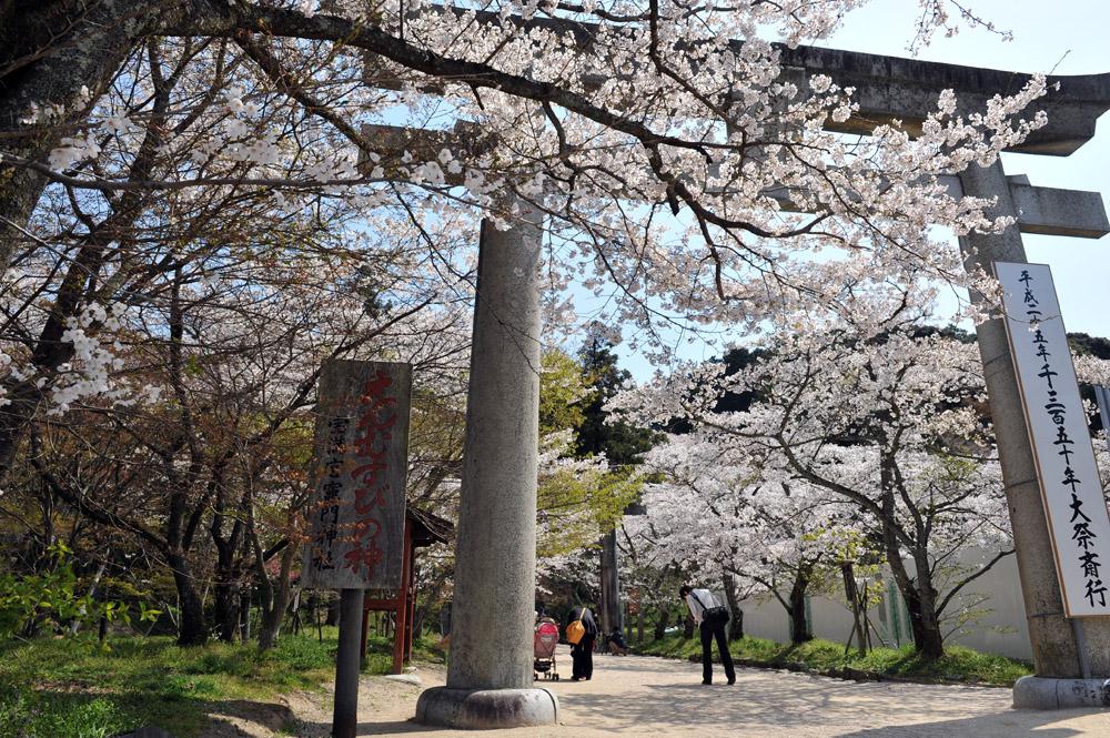宝満宮 竃門神社 桜の季節_a0042310_9565115.jpg