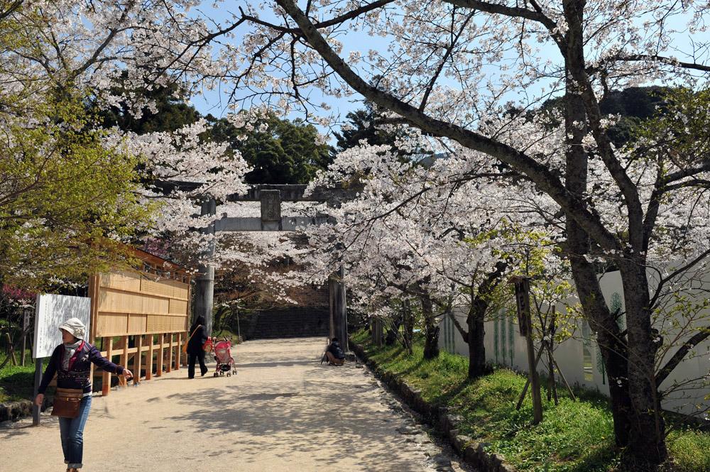 宝満宮 竃門神社 桜の季節_a0042310_9581614.jpg