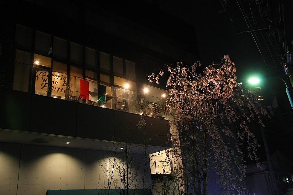 小さな夜桜_b0190710_2226244.jpg