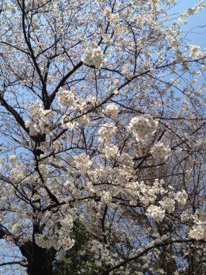 春爛漫_c0188311_18164742.jpg