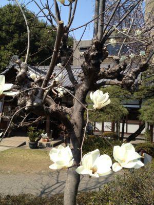 春爛漫_c0188311_18164944.jpg