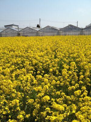 春爛漫_c0188311_1816507.jpg