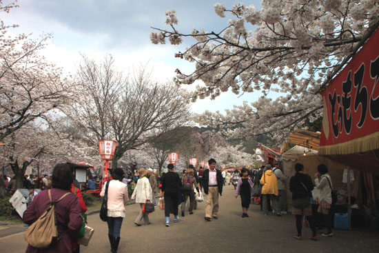 円山公園 満開_e0048413_21511326.jpg
