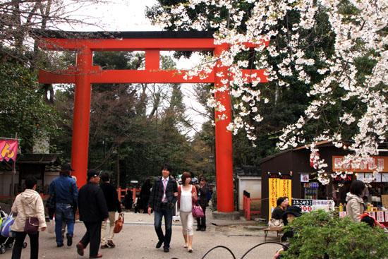 円山公園 満開_e0048413_215119.jpg