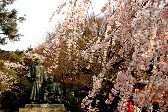 円山公園 満開_e0048413_21521643.jpg