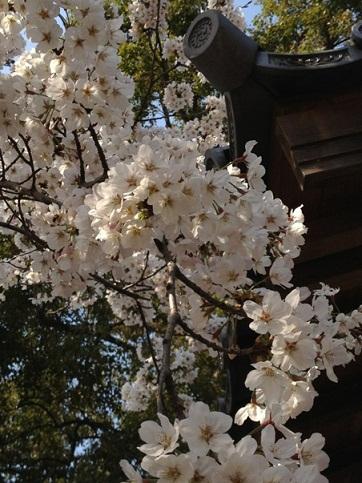 ☆京都の桜&発明家☆_f0191715_12222291.jpg