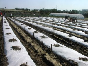 トウモロコの種まき_d0120421_11152037.jpg