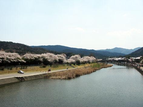 五十鈴川 桜情報 3  満開!_f0129726_2211252.jpg