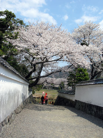 五十鈴川 桜情報 3  満開!_f0129726_2255639.jpg