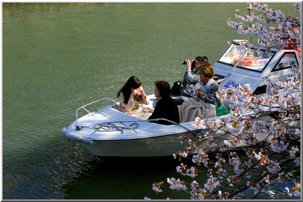 今年のハマ桜(大岡川)_d0123528_191388.jpg
