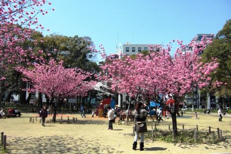 横浜緋桜_a0259130_2115273.jpg