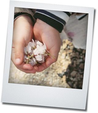 2012、桜_e0214646_1848631.jpg