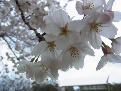 鶴見緑地公園_e0270846_23352869.jpg