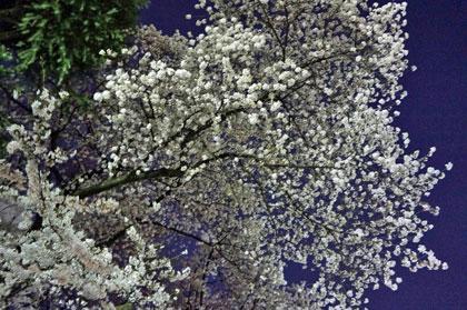 花見 その2_a0132151_13164347.jpg