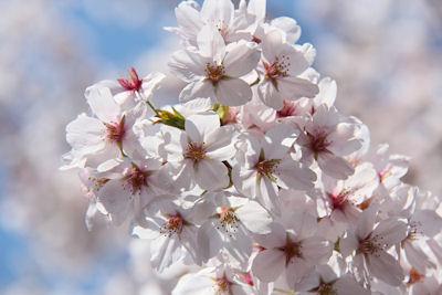 桜咲く!_d0034352_22112390.jpg
