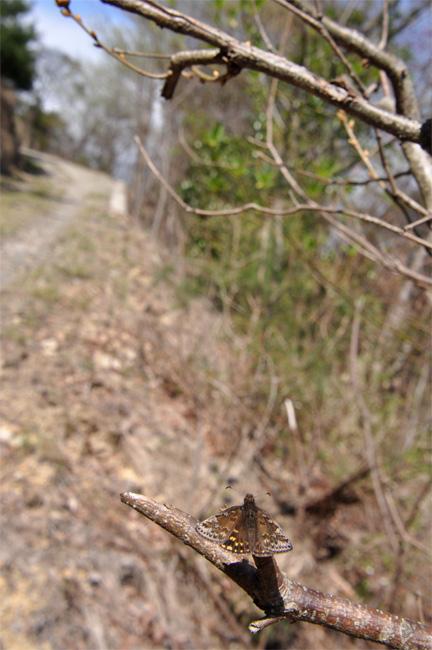 2012年4月の蝶_e0194952_7363143.jpg