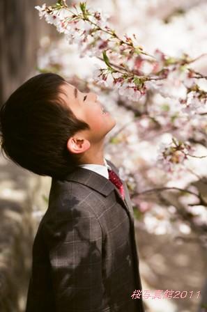 桜写真館 はじまります♪_e0170966_17512511.jpg