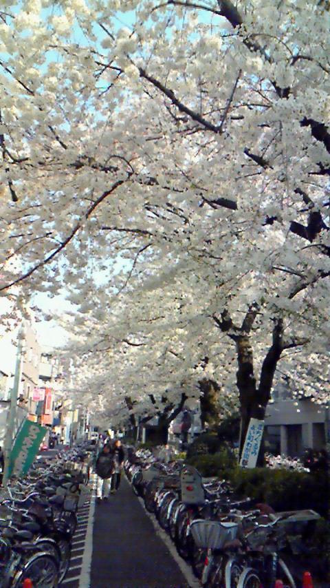 さくらも咲いて、新学期♪アートをしましょう!_e0274266_17212446.jpg