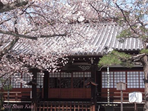 今出川界隈の桜 2012年4月8日_a0164068_14342310.jpg