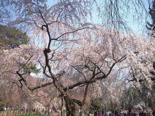 今出川界隈の桜 2012年4月8日_a0164068_14353735.jpg