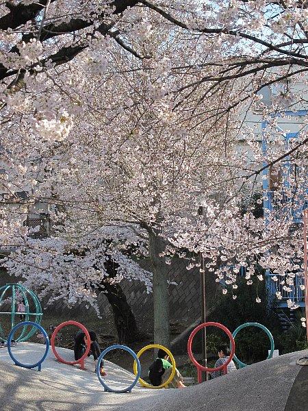 桜を、どう撮りましたか。_b0141773_0502256.jpg