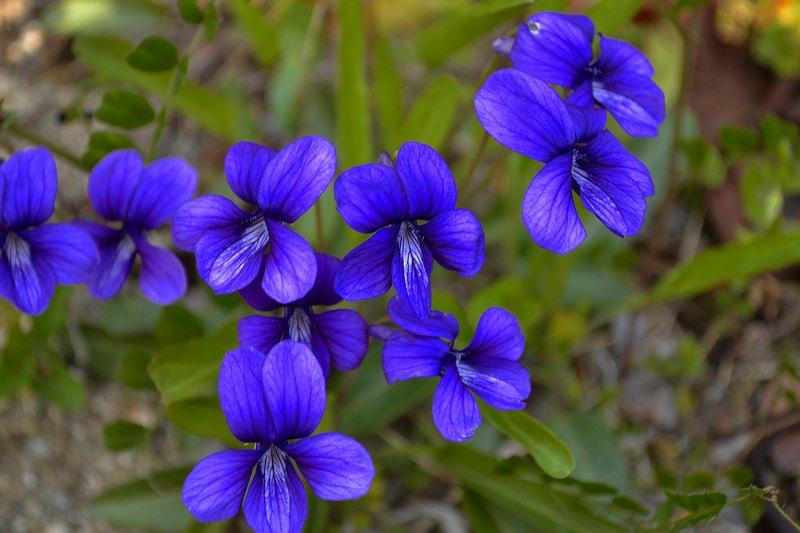 春の草花_b0155776_20584780.jpg