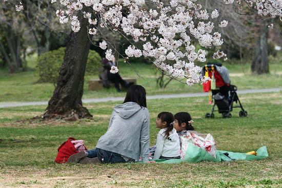 お花見三昧(小石川植物園)にて4/6日_f0030085_20284797.jpg