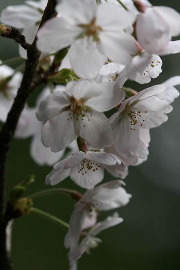 お花見三昧(小石川植物園)にて4/6日_f0030085_2029370.jpg