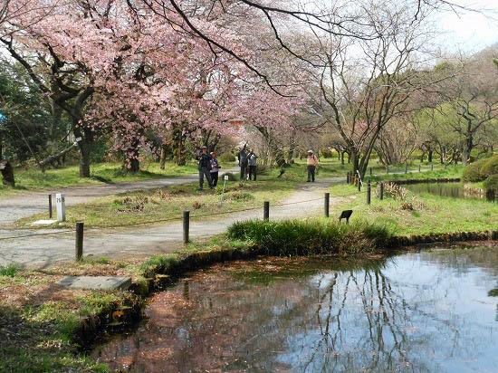 お花見三昧(小石川植物園)にて4/6日_f0030085_20294848.jpg