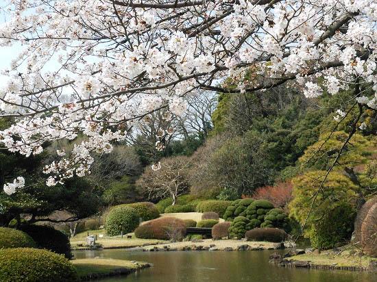 お花見三昧(小石川植物園)にて4/6日_f0030085_20335230.jpg