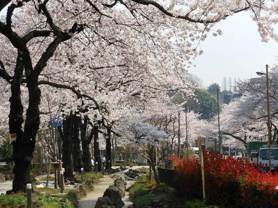 お花見三昧(小石川植物園)にて4/6日_f0030085_20362680.jpg
